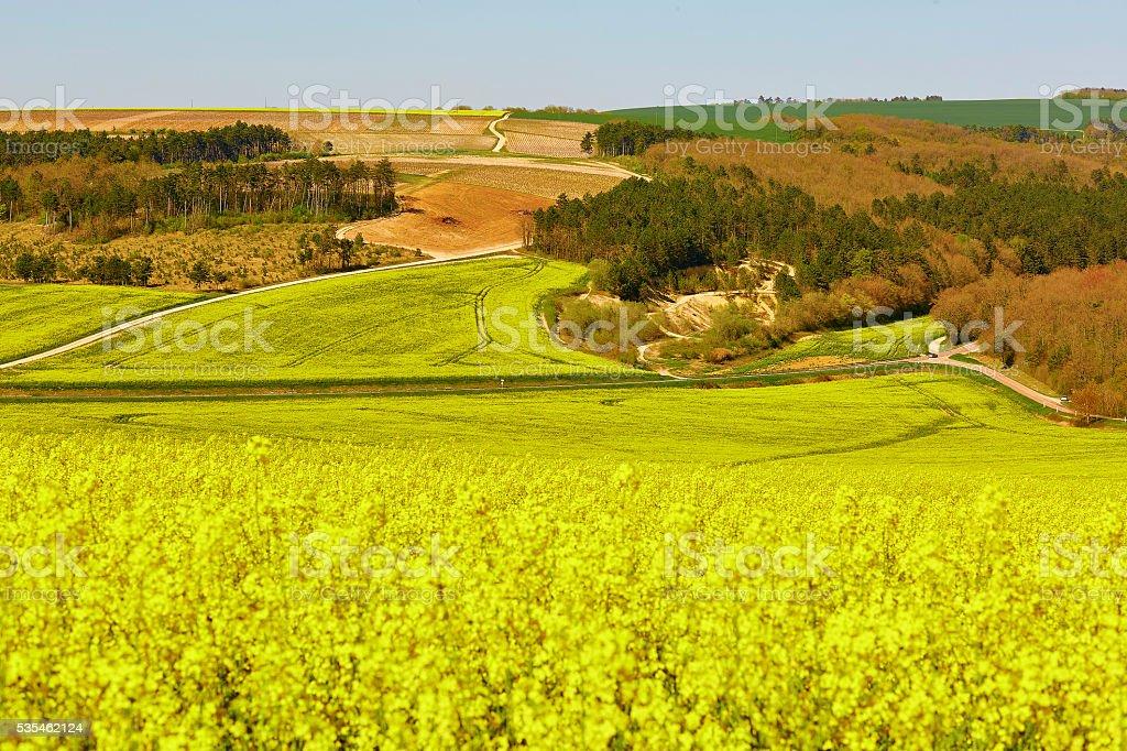 Beautiful rapeseed fields  in Burgundy, France stock photo