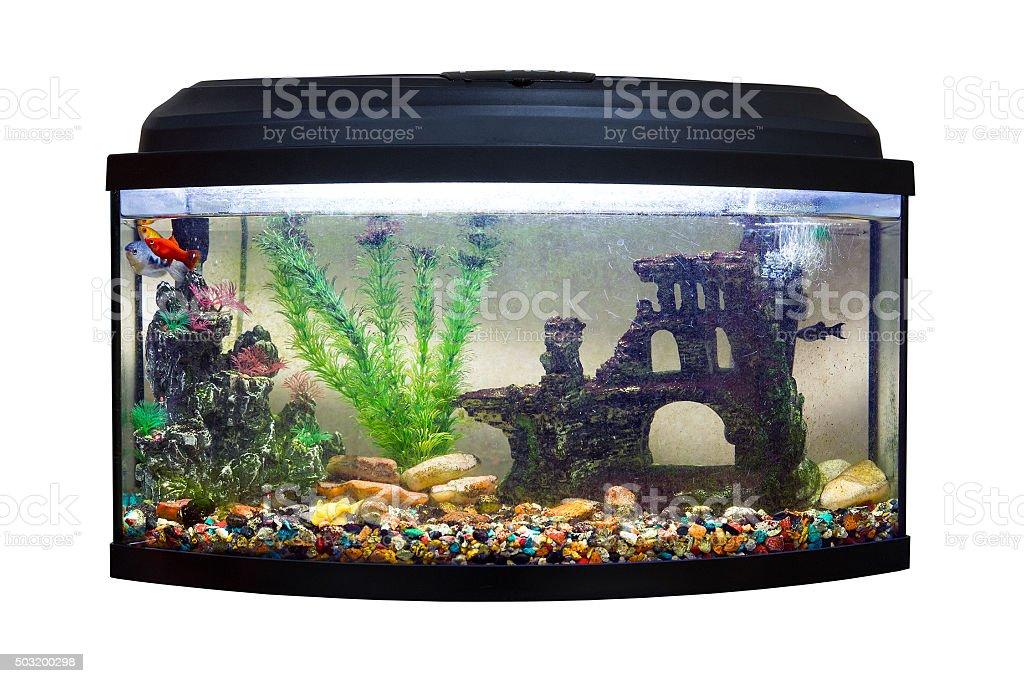 Beautiful rectangular aquarium on white background stock photo