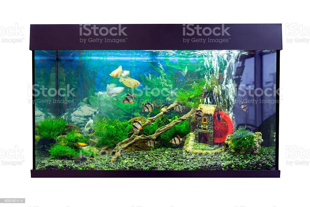 Beautiful rectangular aquarium with tropical fish on a white background stock photo