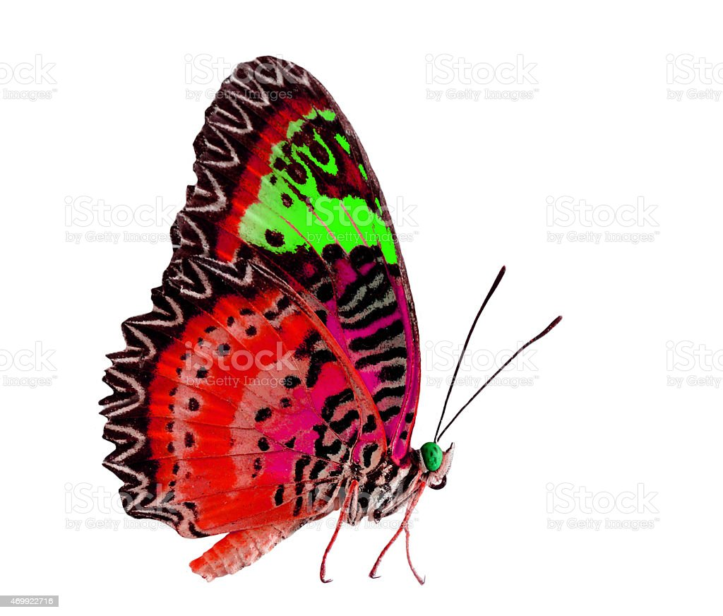 Beautiful Red and Green Butterfly isolated on white background stock photo