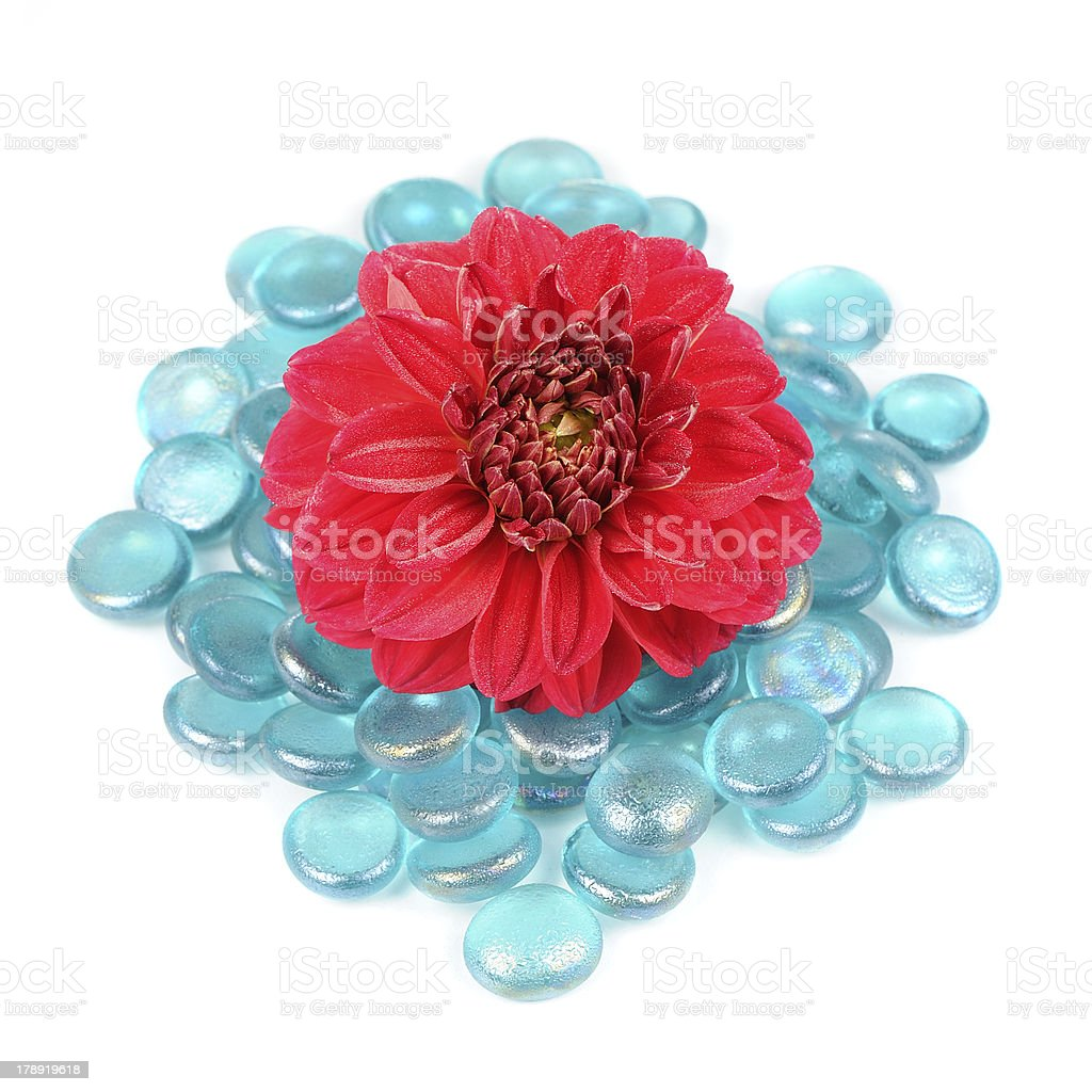 Beautiful Red Dahlia with Blue Glass Stones Isolated on White royalty-free stock photo