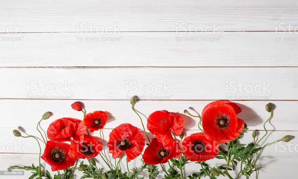 beautiful red poppies on old white wooden table stock photo