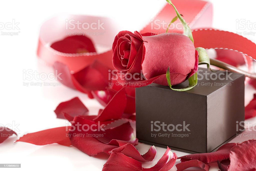 Beautiful Red Rose, Petals, Ribbon, and Jewelry Box on White stock photo