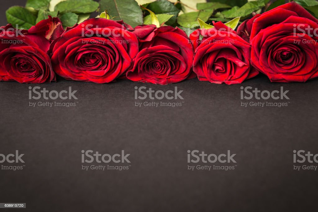 beautiful red roses on black background stock photo
