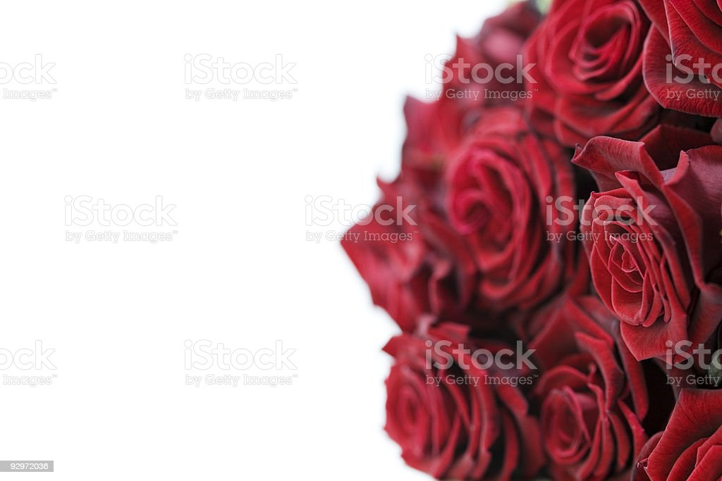 Beautiful Red Roses stock photo