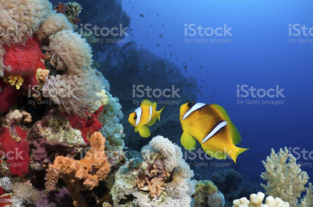 Beautiful Reef stock photo