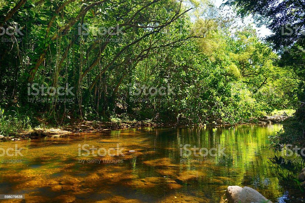 Beautiful river in Waimea Valley on Oahu island stock photo