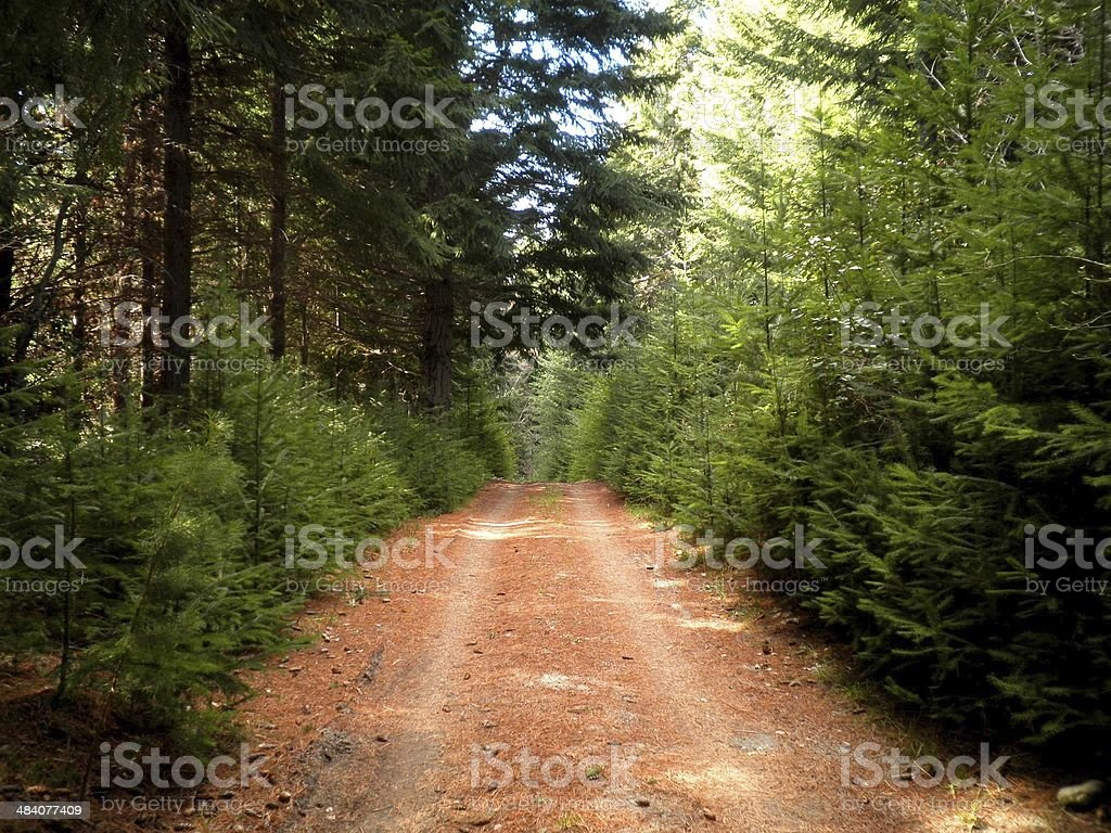 Beautiful Road in Argentina royalty-free stock photo