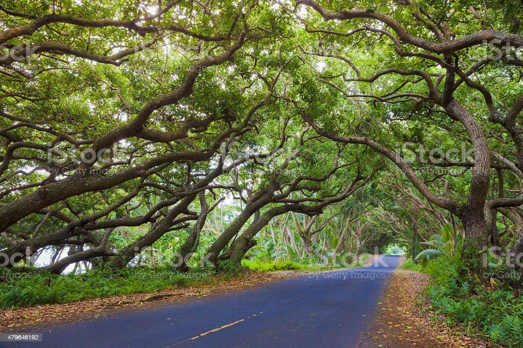 Beautiful road stock photo