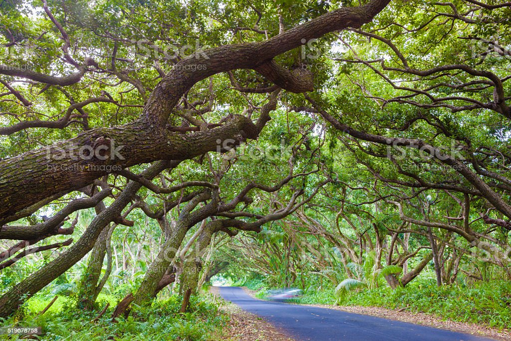Beautiful road stock photo