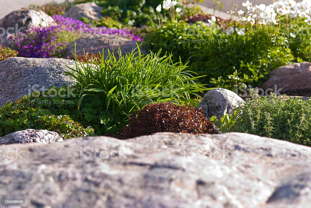 Beautiful Rock Garden and Flowers royalty-free stock photo