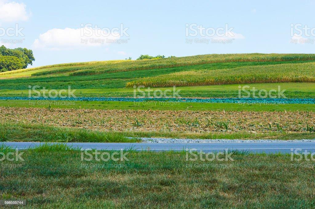 Beautiful rolling corn field hills in Pennsylvania stock photo