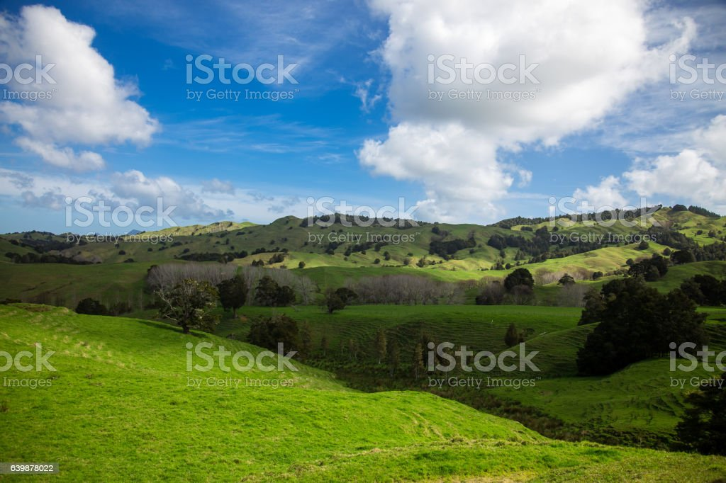 Beautiful Rolling Landscape in New Zealand stock photo