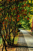 Beautiful romantic alley in park with colorful trees and sunlight