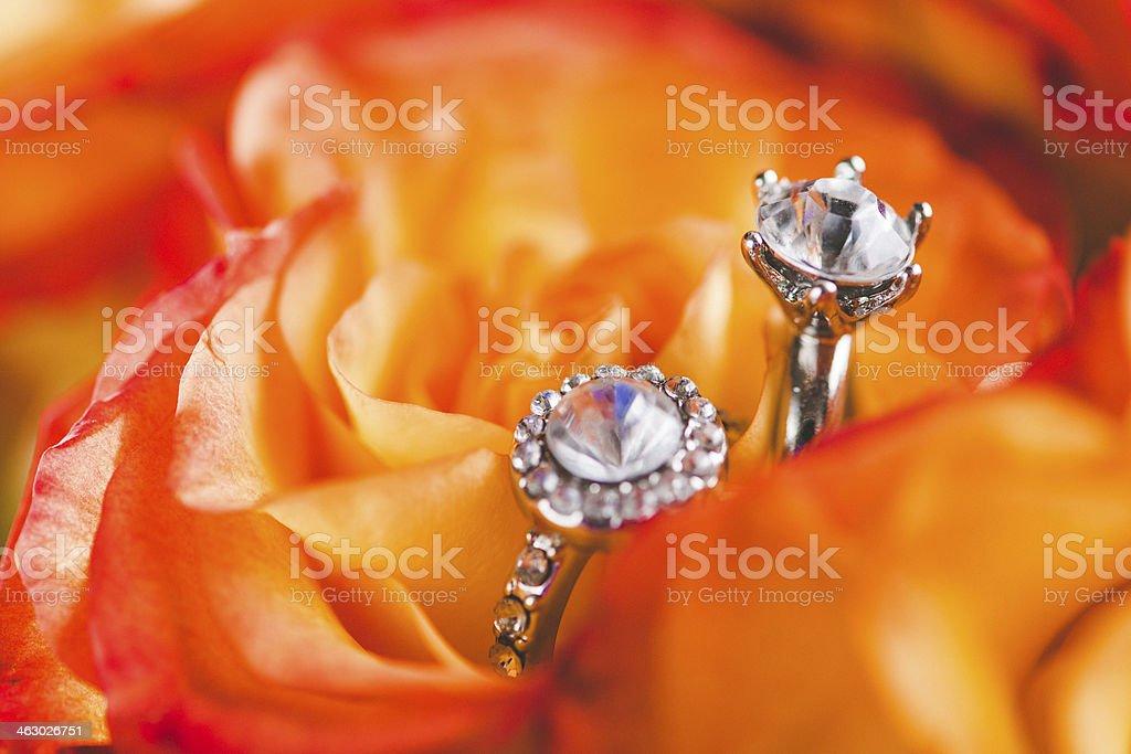 Beautiful rose and rings stock photo