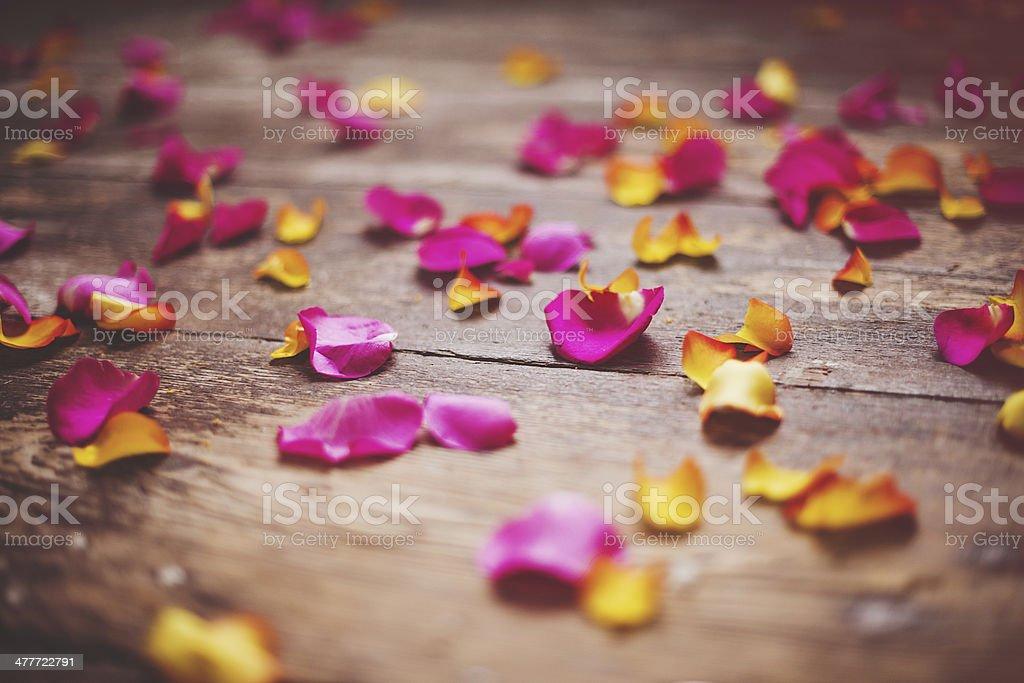 Beautiful rose petals stock photo