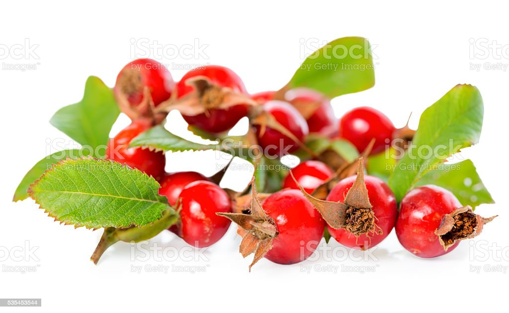 beautiful rosehip twigs with leaves and red ripe berries stock photo