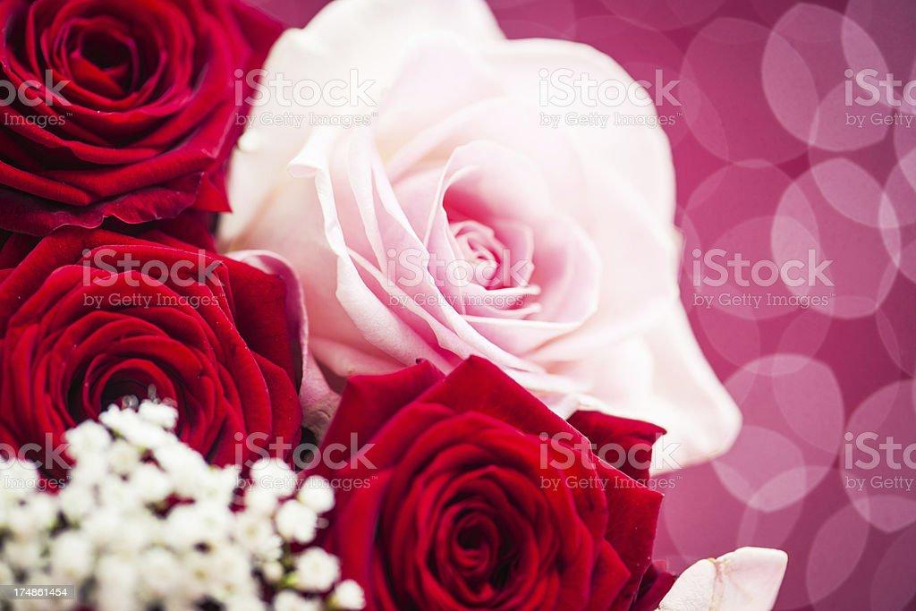 Beautiful roses royalty-free stock photo