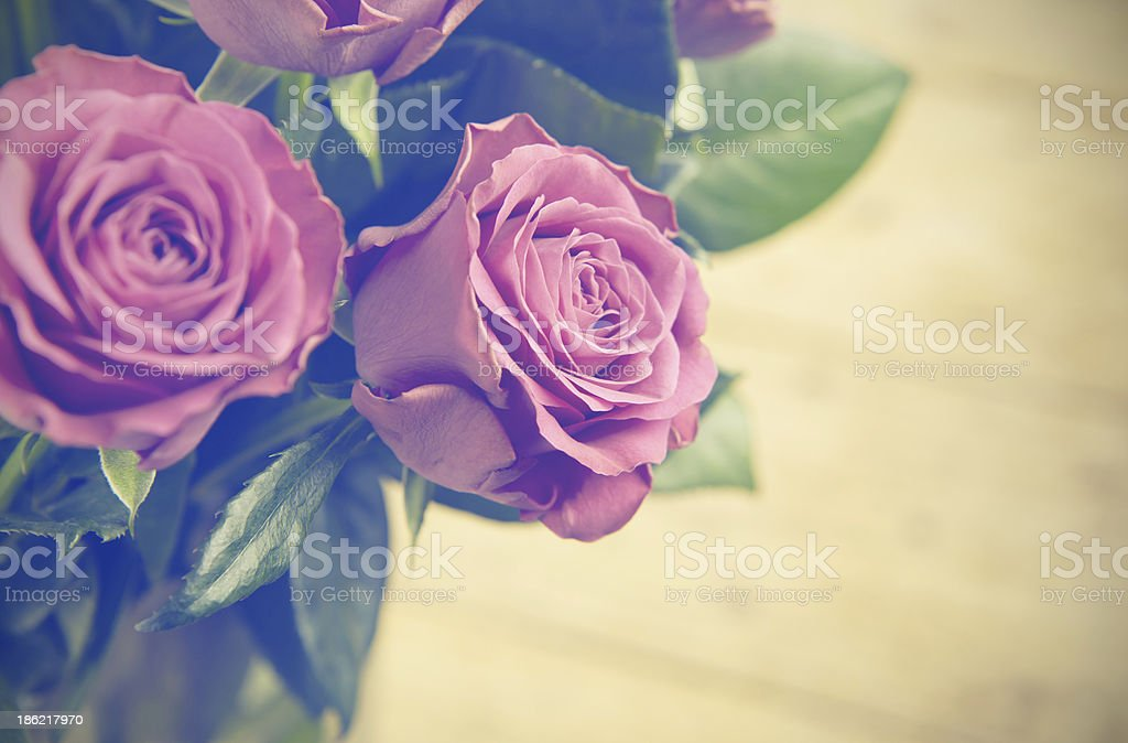 Lindas rosas foto royalty-free