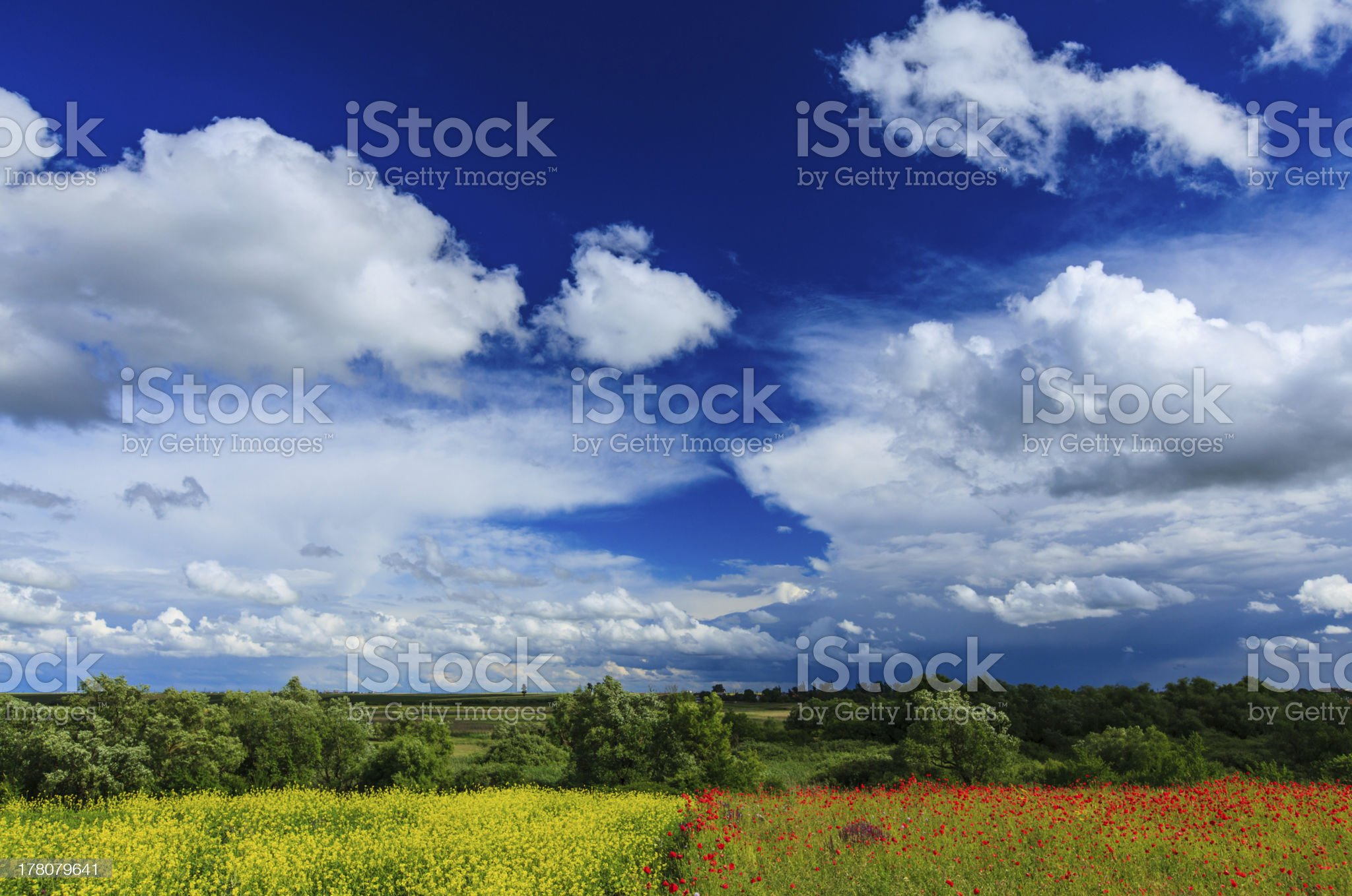 Beautiful rural field in summer royalty-free stock photo