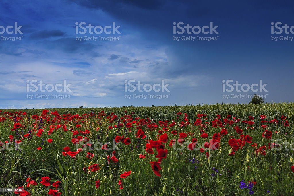Beautiful rural fields in summer royalty-free stock photo