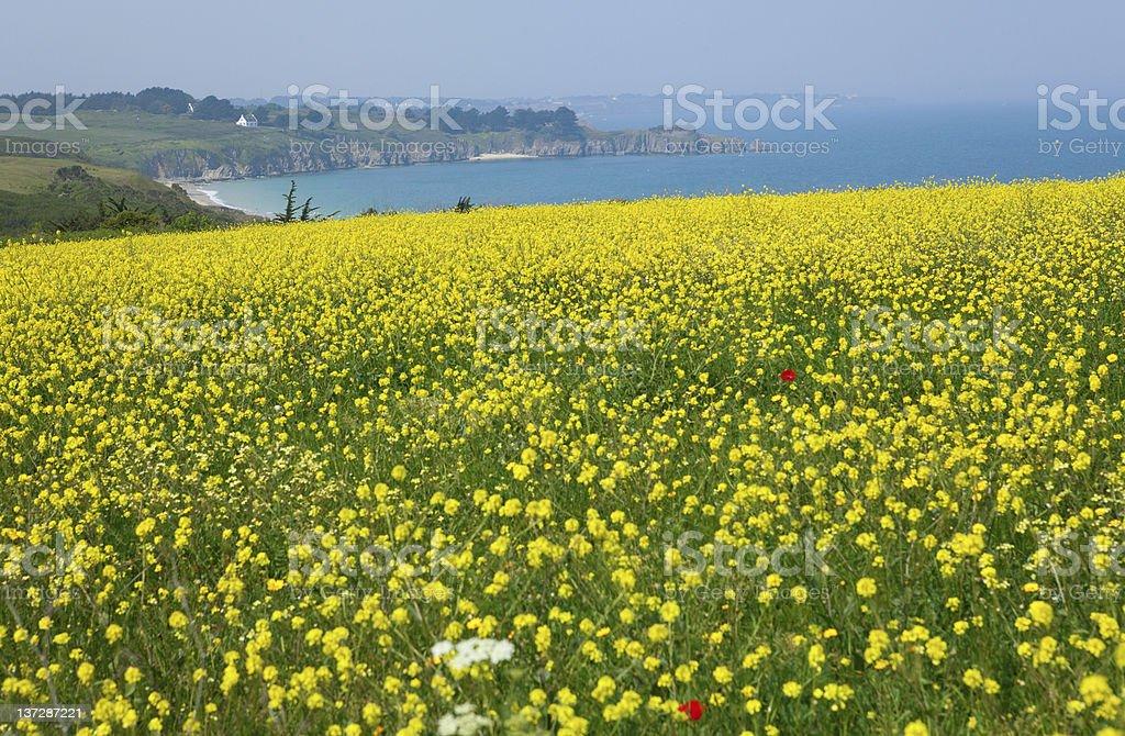 Beautiful rural landscape of Belle-Ile-en-Mer in France stock photo