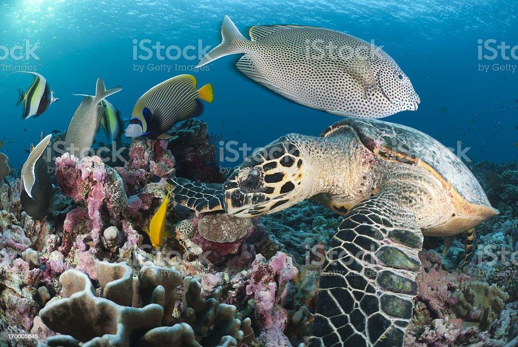 beautiful scene on coral reef stock photo