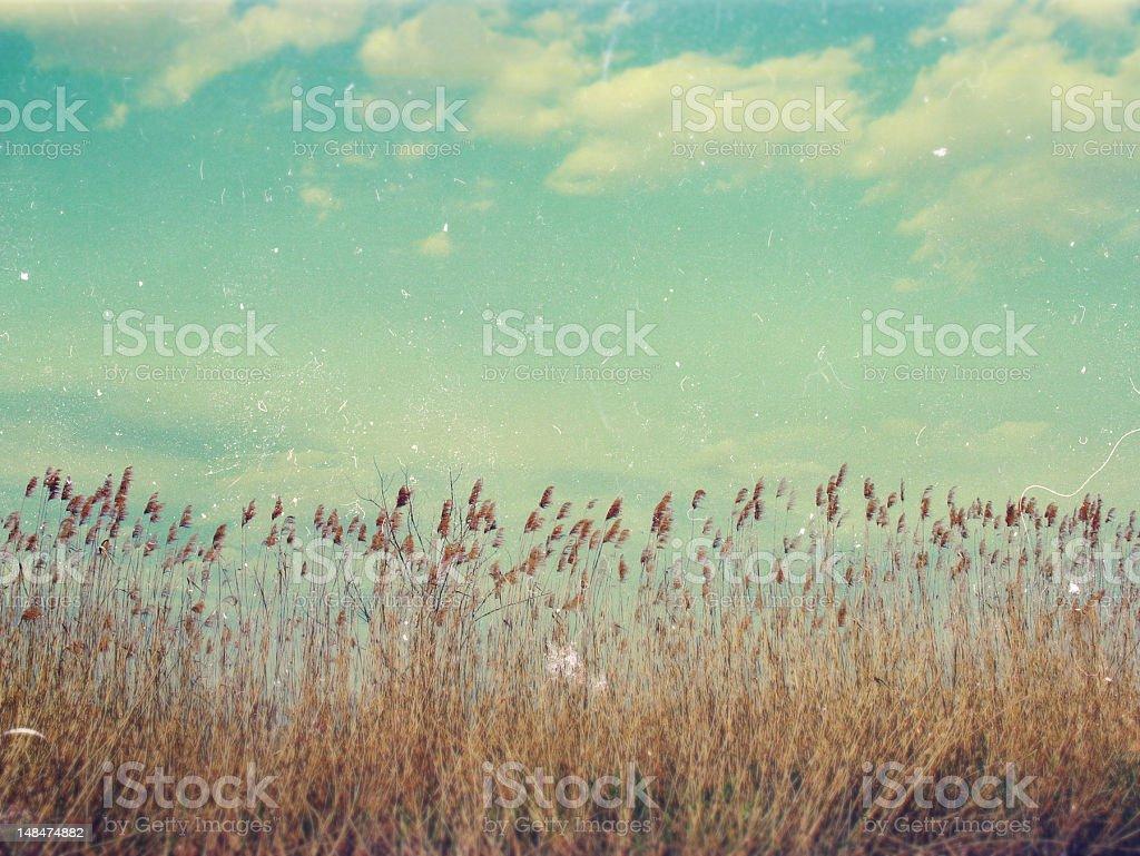 Hermosos paisajes, los bosques en Ucrania foto de stock libre de derechos