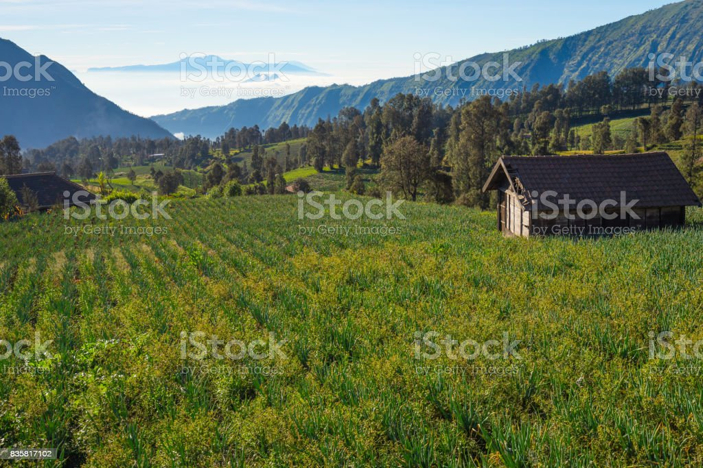 Beautiful scenery of Cemoro Lawang village in a morning, Bromo mountain, East Java, Indonesia stock photo