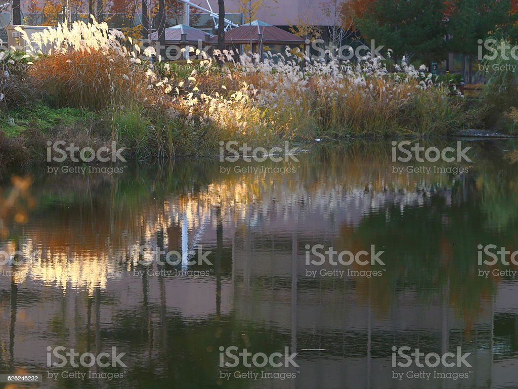 Beautiful Scenery of Late Autumn stock photo