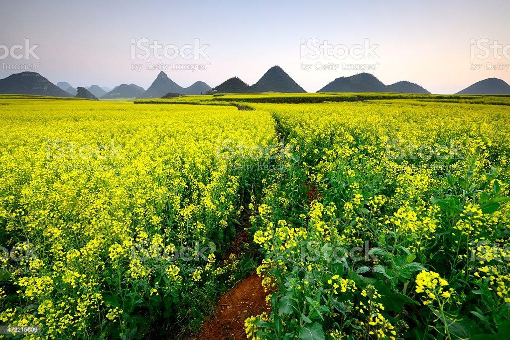 Beautiful scenery of the field stock photo