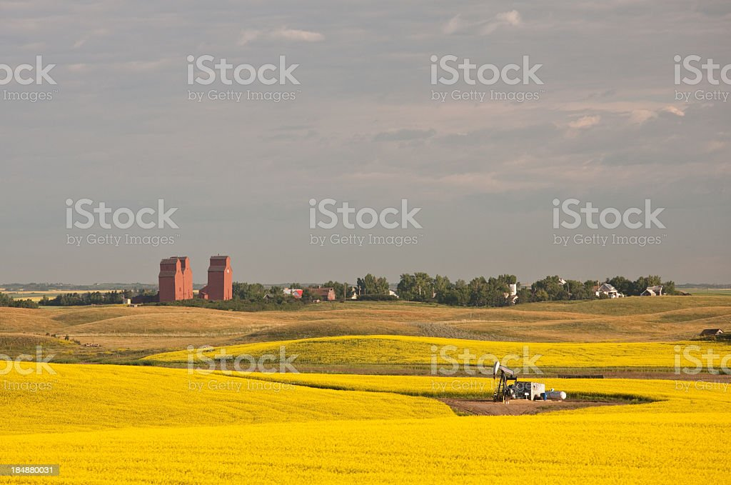 Beautiful Scenic of Rolling Hills and Canola in Alberta royalty-free stock photo