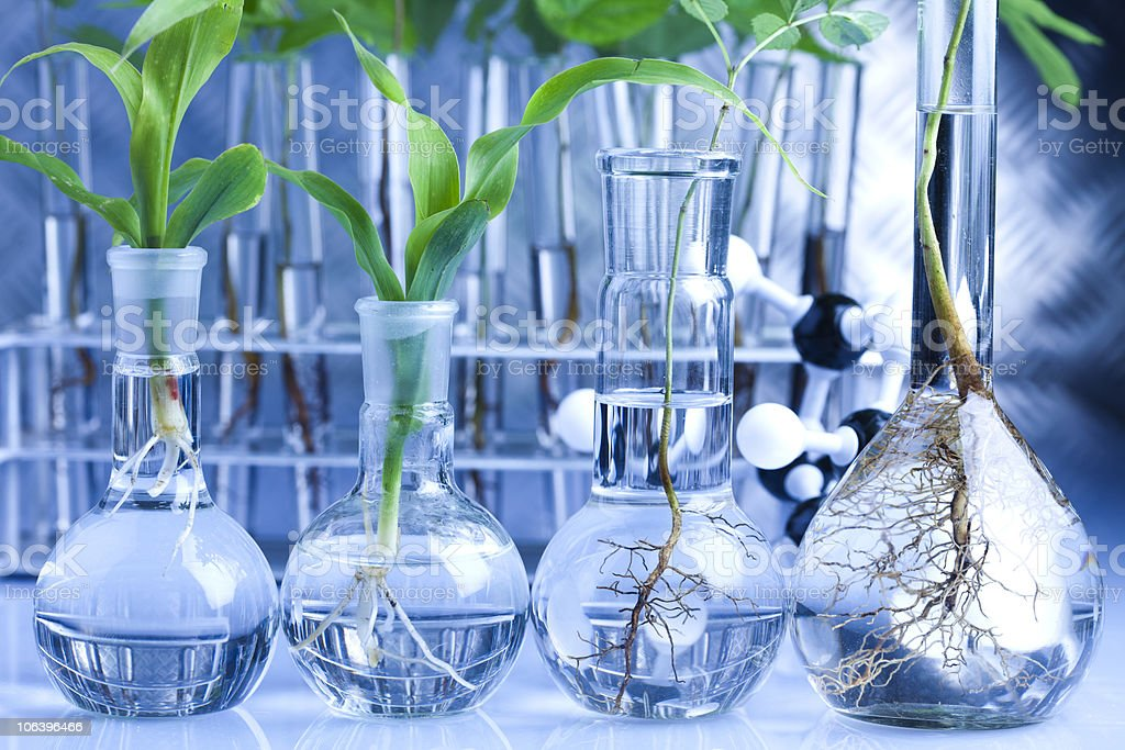 A beautiful science project in a blue laboratory royalty-free stock photo