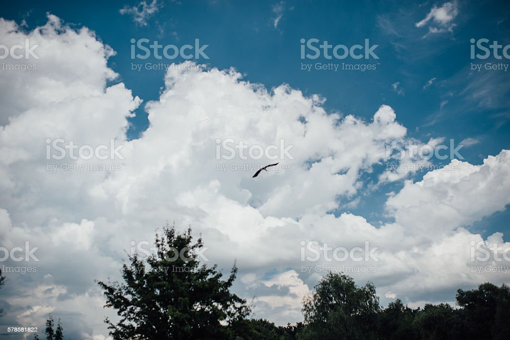 beautiful sea gull flying in a blue sky stock photo