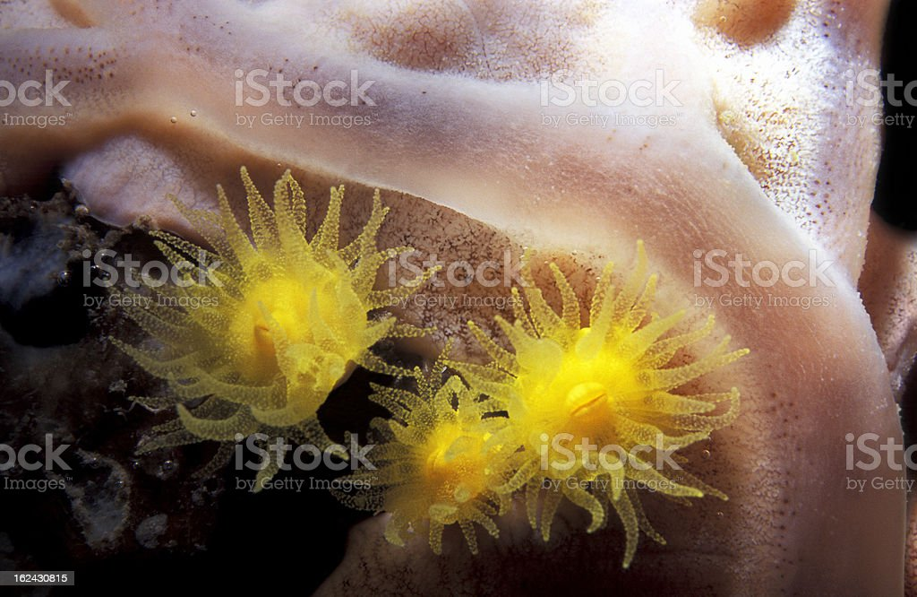 Beautiful Sea Life stock photo