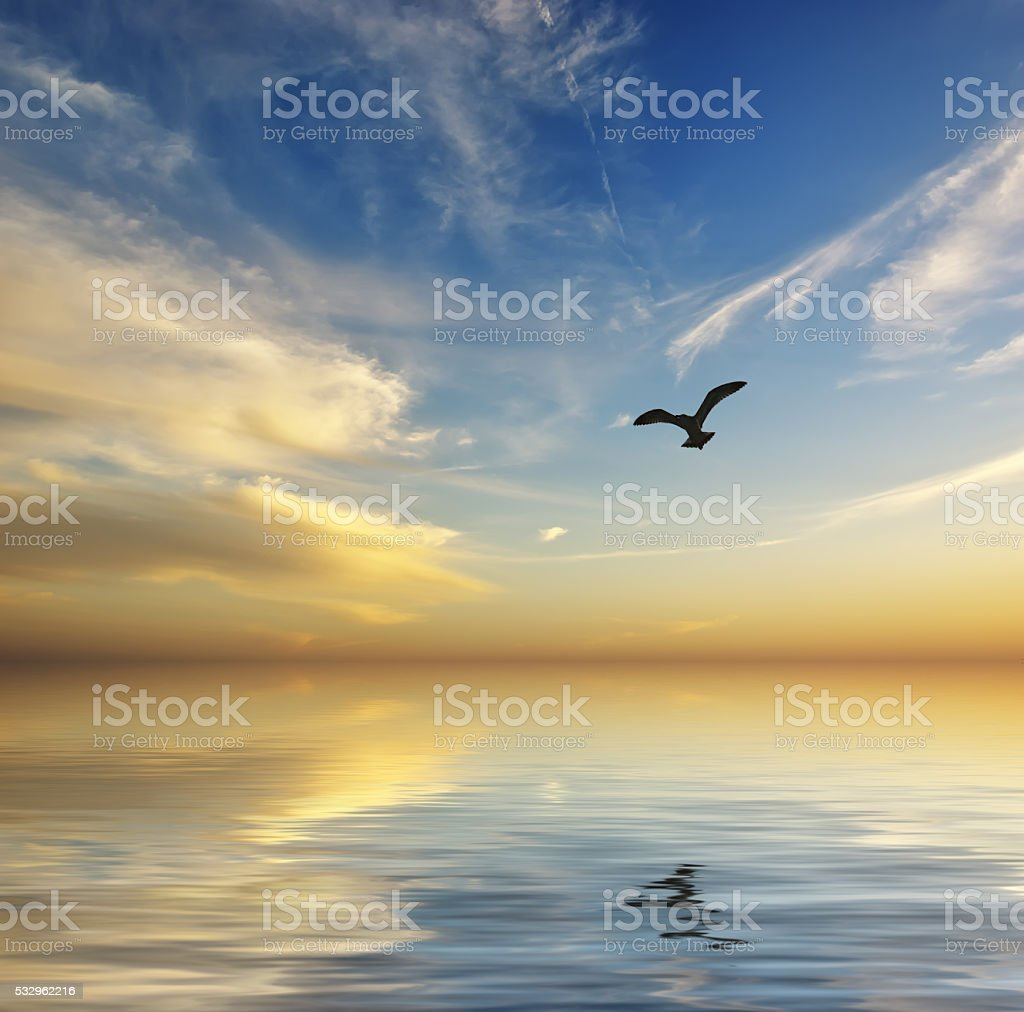Beautiful seascape. Sunset and flying seagull stock photo
