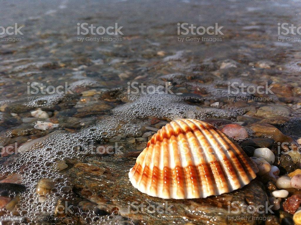 Beautiful seashell next to sea stock photo