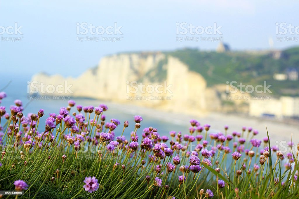 Beautiful seaside photo of Normandy landscape with flowers royalty-free stock photo
