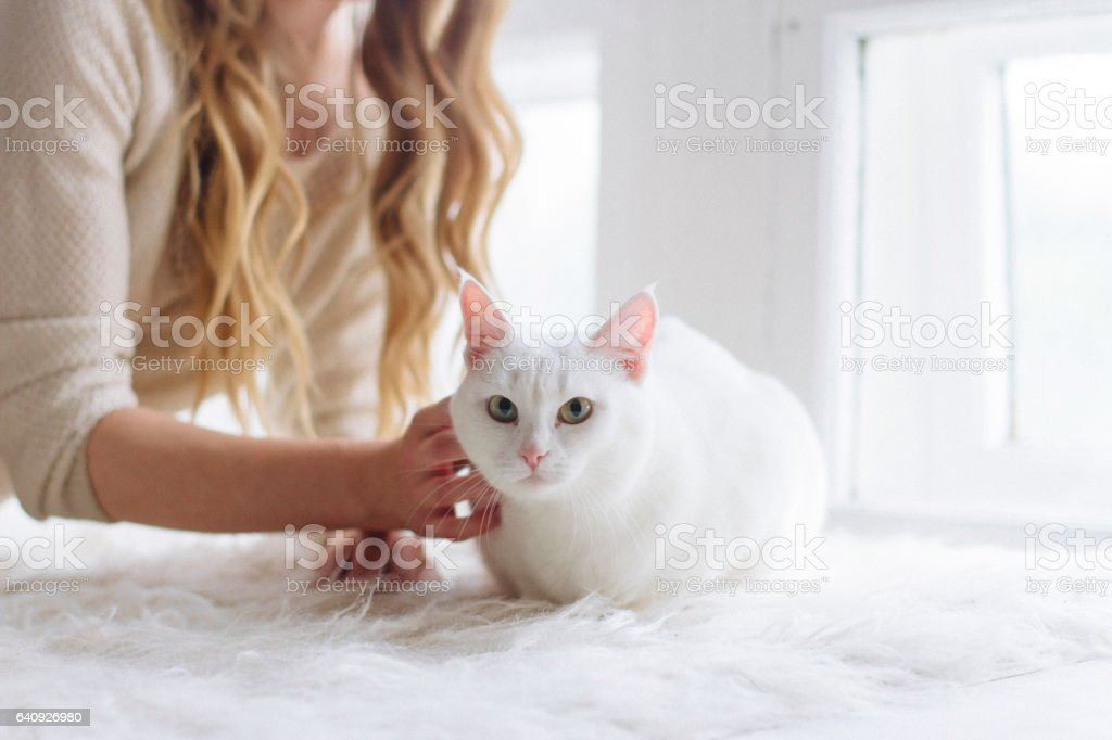 beautiful sexy blonde sitting in the window along with the cat stock photo