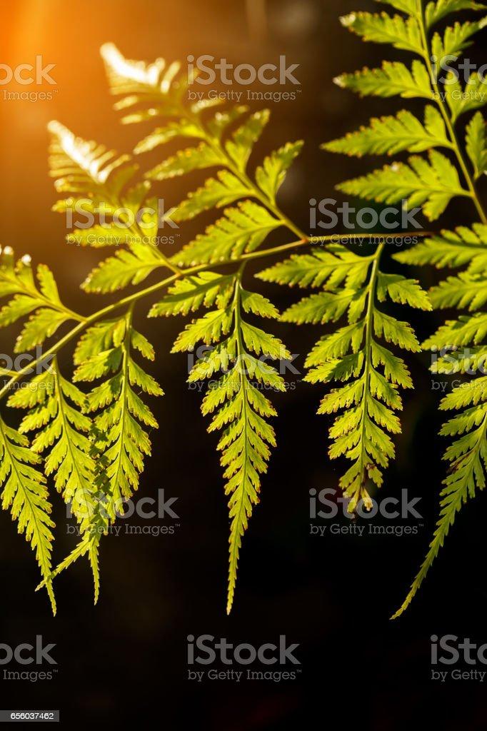 beautiful shape of leaves stock photo