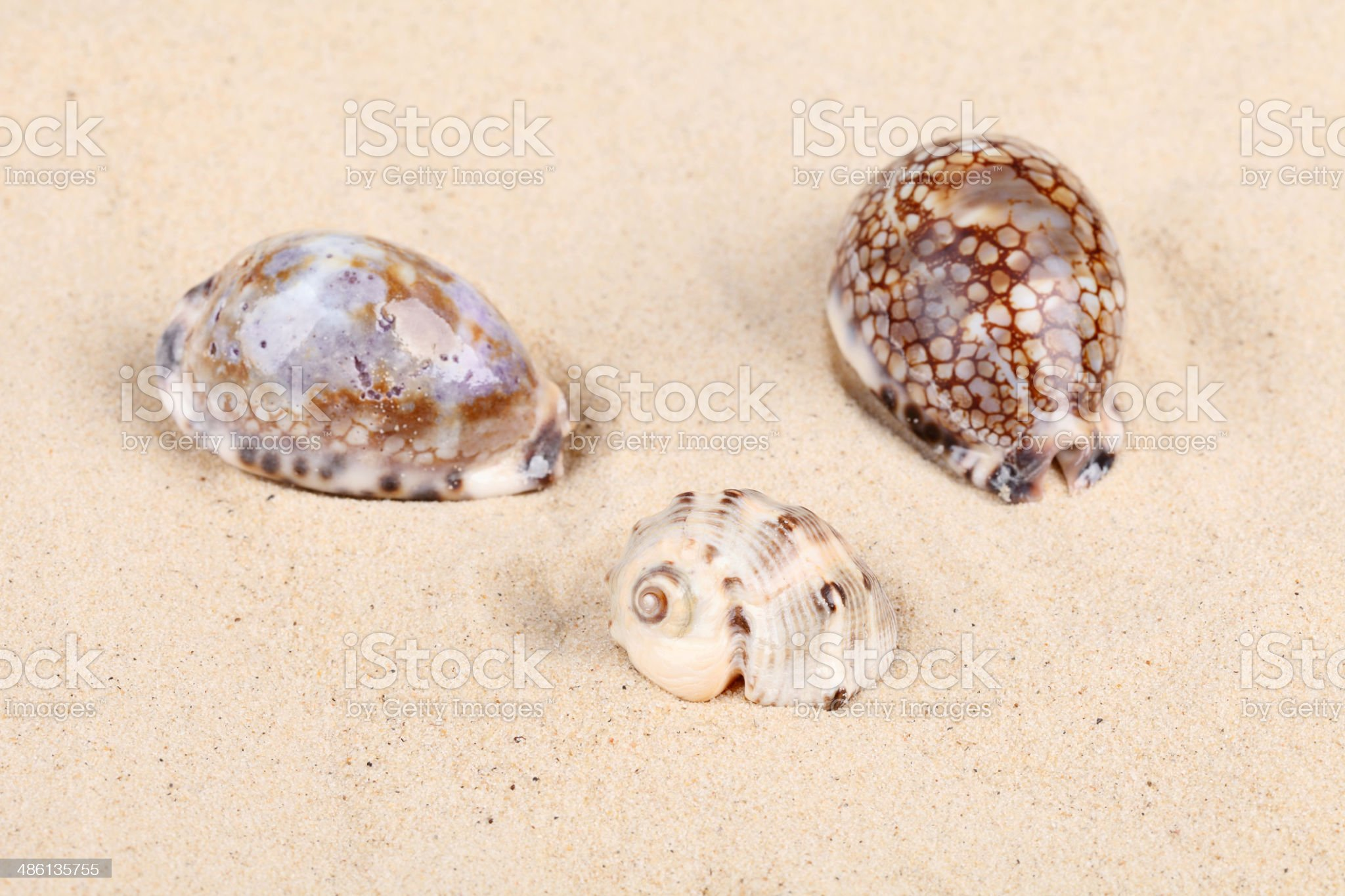 Beautiful shells in sand royalty-free stock photo
