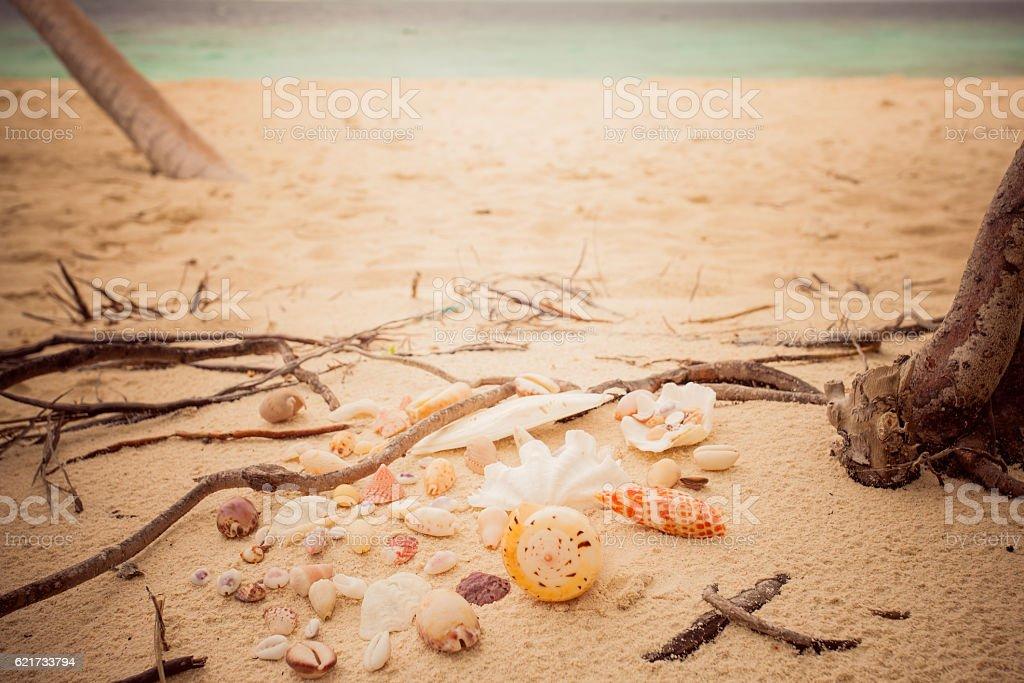 beautiful shells sandy beach roots island stock photo