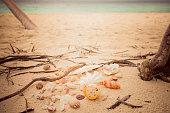 beautiful shells sandy beach roots island