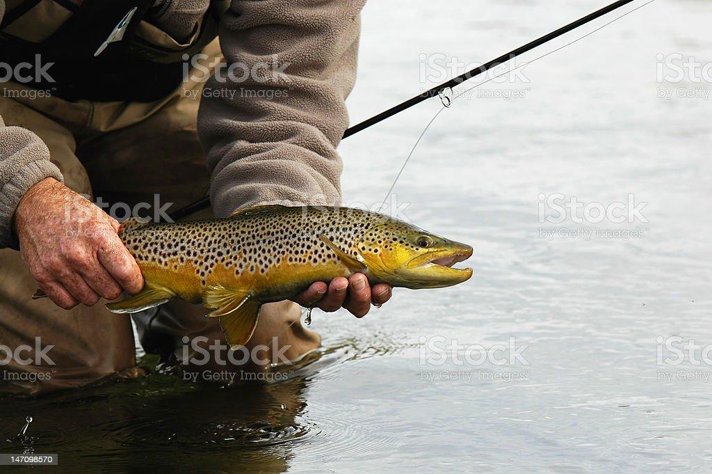 Beautiful Silver Creek, Idaho brown trout royalty-free stock photo