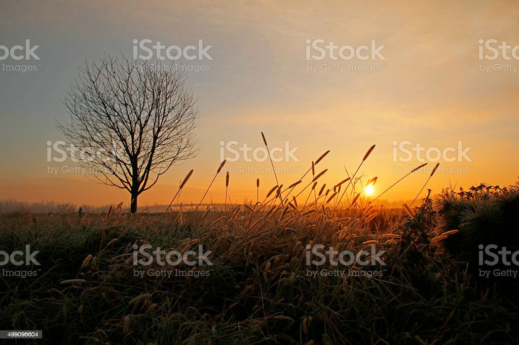 Beautiful single tree on field at sunrise stock photo