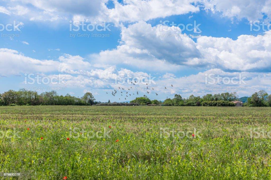 Beautiful sky in spring stock photo