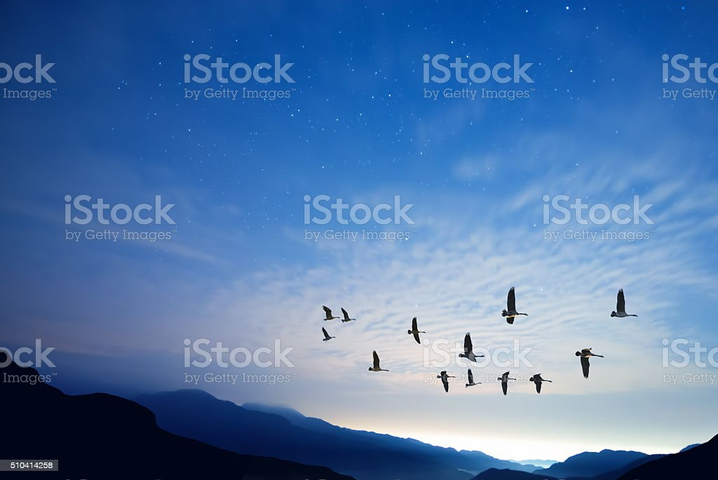 Beautiful sky on sunset or sunrise with flying birds stock photo