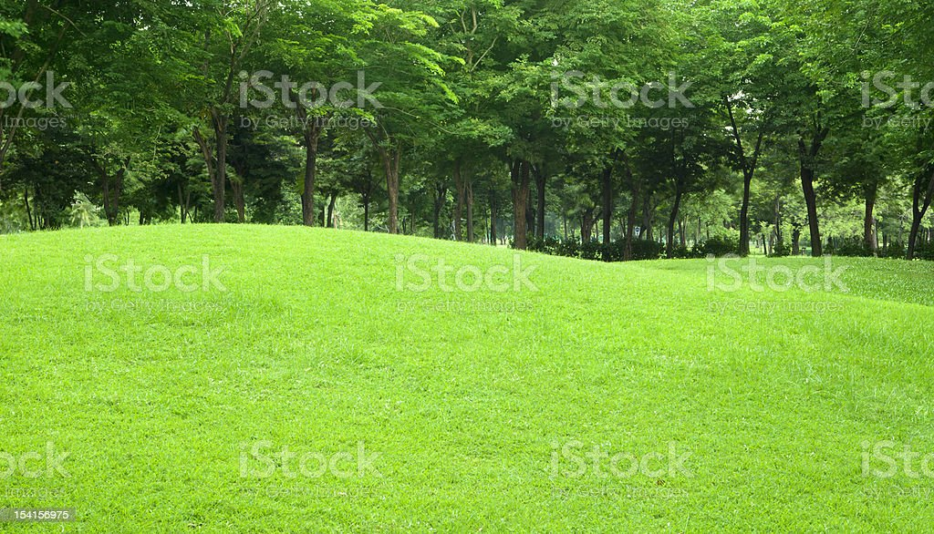 beautiful sloping backyard with vibrant green grass and tree in royalty-free stock photo