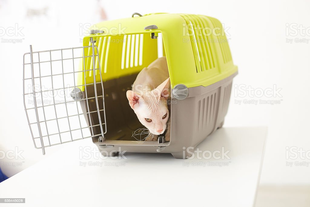 Beautiful small animal in cage stock photo