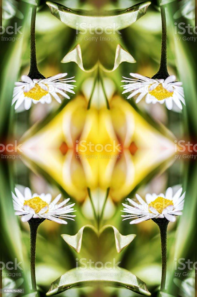 Beautiful small common Daisy flowers macro surreal shaped symmetrical kaleidoscope stock photo